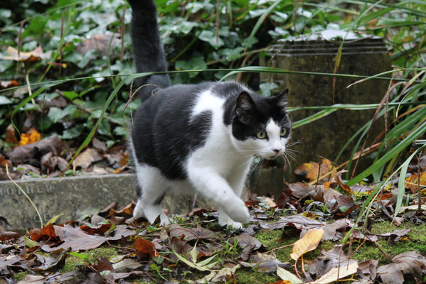 highgate cemetery cat
