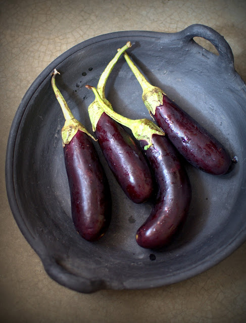long purple brinjals