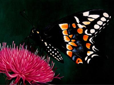 cuadros-mariposas