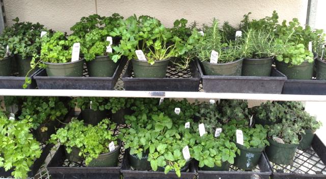 Huerto en casa como cultivar cilantro perejil albahaca - Cosas de cocina ...