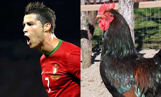 Cristiano Ronaldo cockerel
