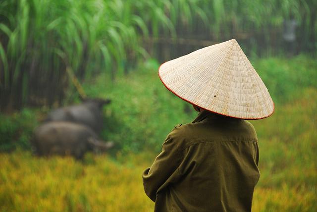 On rice field - Photo An Bui