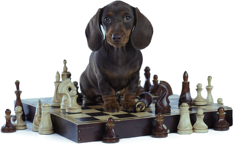"""Develops your Dog's """"Hidden Intelligence"""" To eliminate bad behavior and Create the obedient, well-b"""