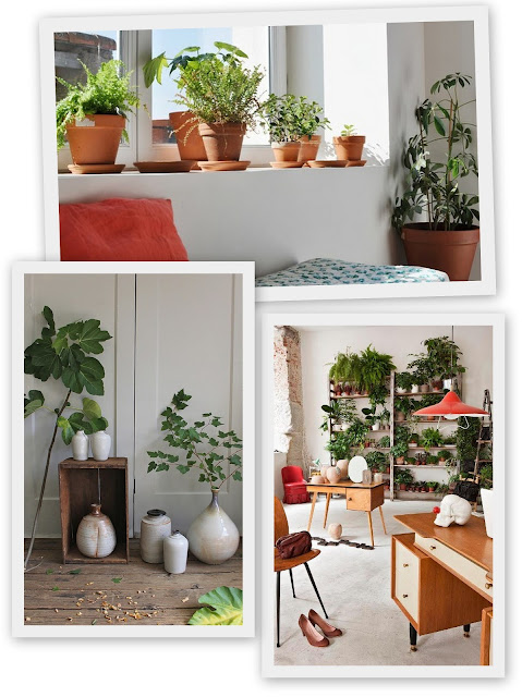Piante, piante, piante!!