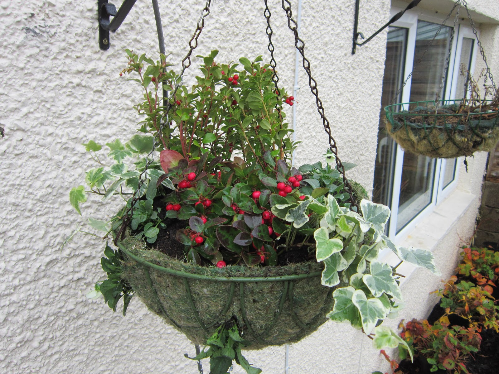 seeds roots leaves and fruits an edible hanging basket for the winter. Black Bedroom Furniture Sets. Home Design Ideas