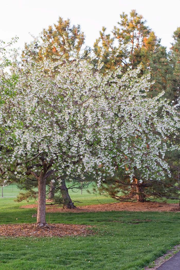 denver life, denver living, denver pollen, denver park