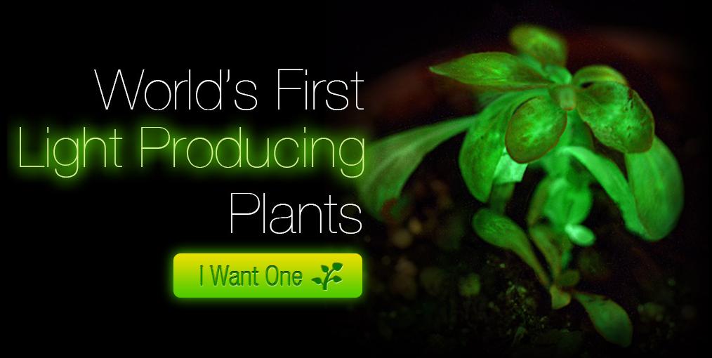 planta fluorescente