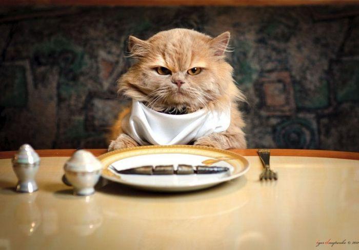 Offtopiqueando - Página 3 Gato-en-la-mesa