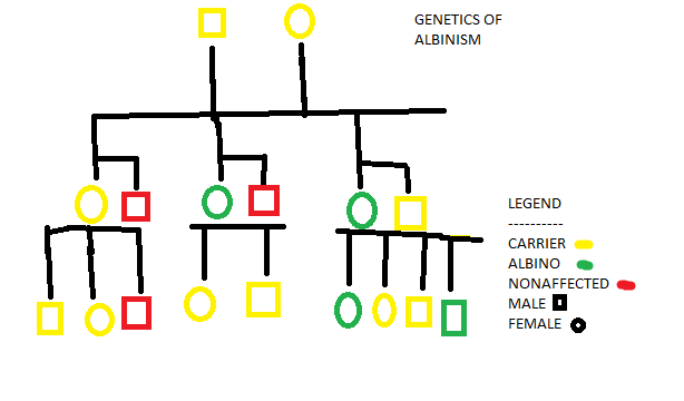 Of all things Random: genetics of albinism