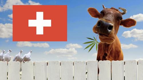 Suíça: Genebra apoia a legalização da maconha