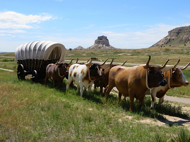 Pioneer Covered Wagon Oxen That wagon, your spouse,