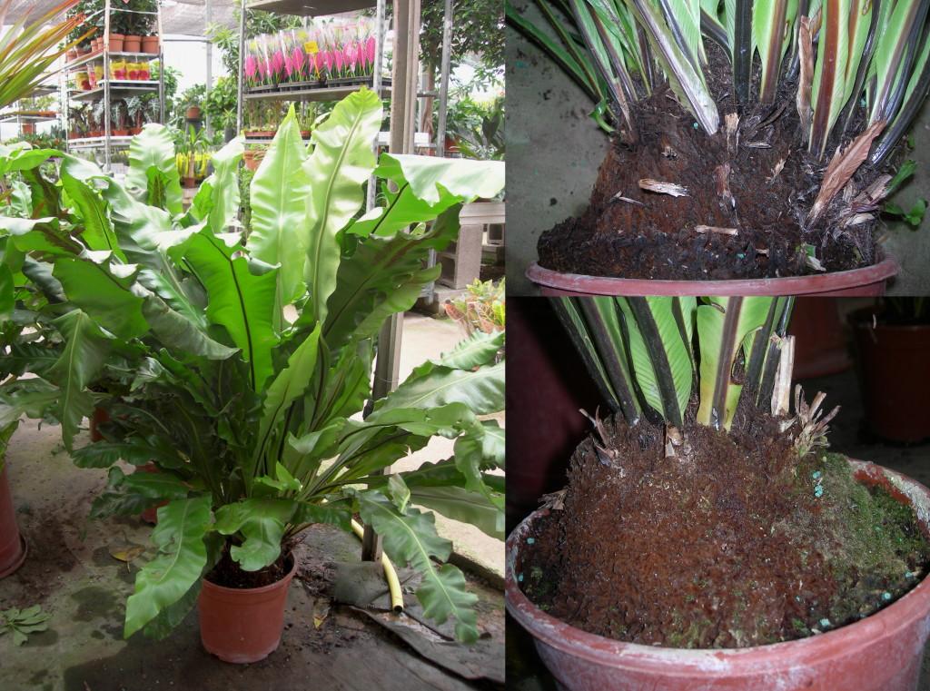 Viveros vangarden un nido verde for Vivero plantas tropicales