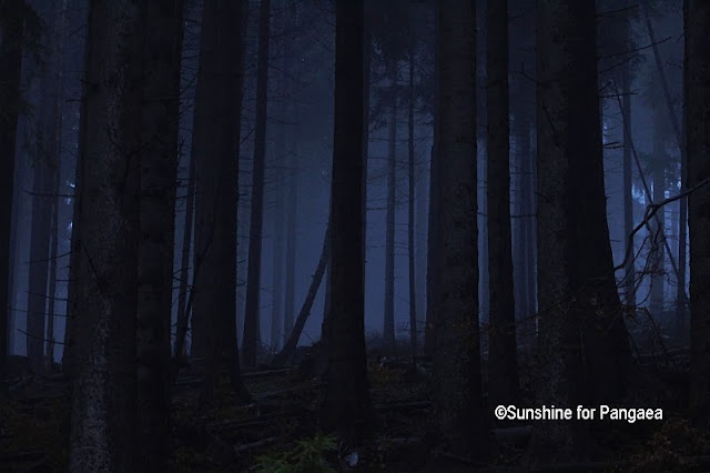 Night photography in a forest