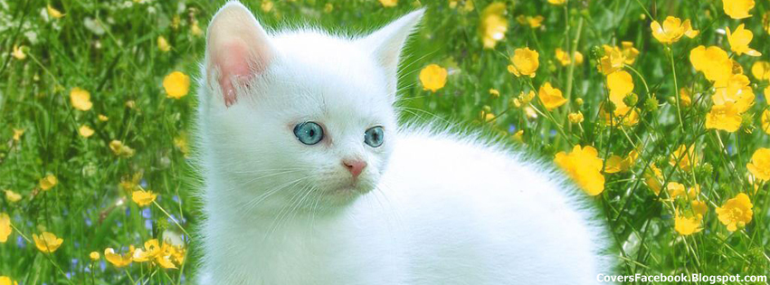 Lovely Cute White Cat FB Covers