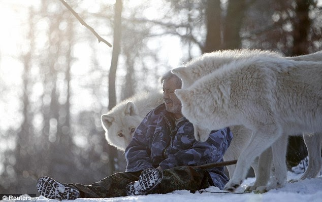 Meet The Wolfman!  Who Is So Close To Wolves They Eat Meat From His MOUTH