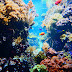 Erlebnis Aquarium Berlin