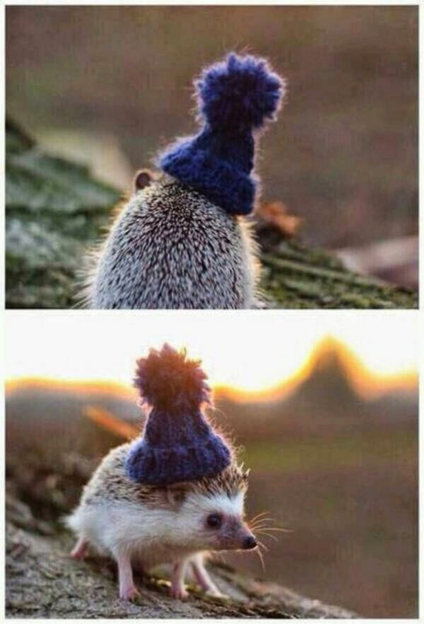 Funny animals of the week - 7 November 2014 (40 pics), photo of animals, animal picture