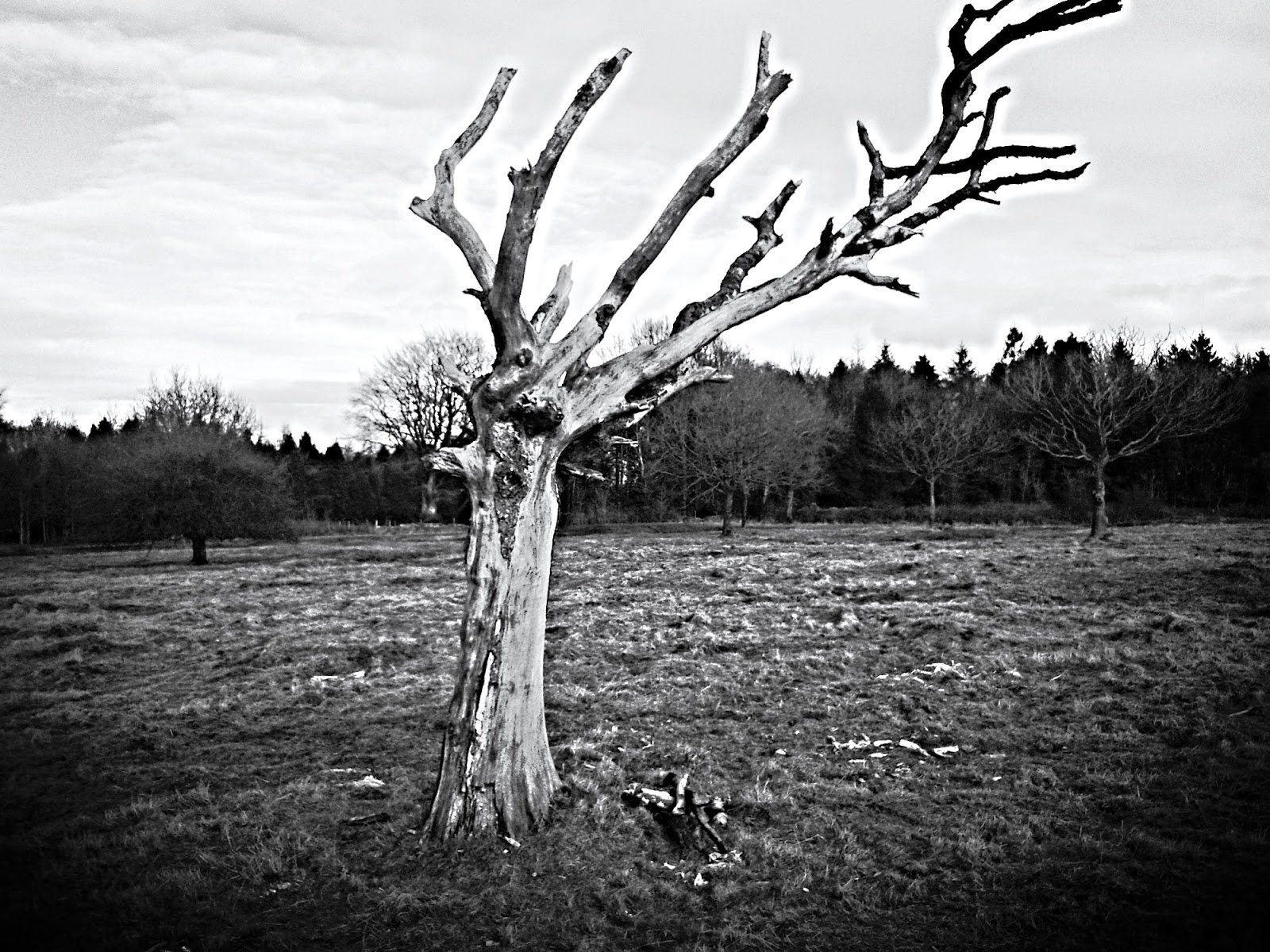 Dead Tree - The Mendips // 76sunflowers