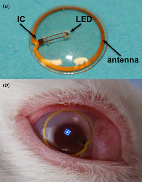 Single pixel contact lens display, in a rabbit's eye