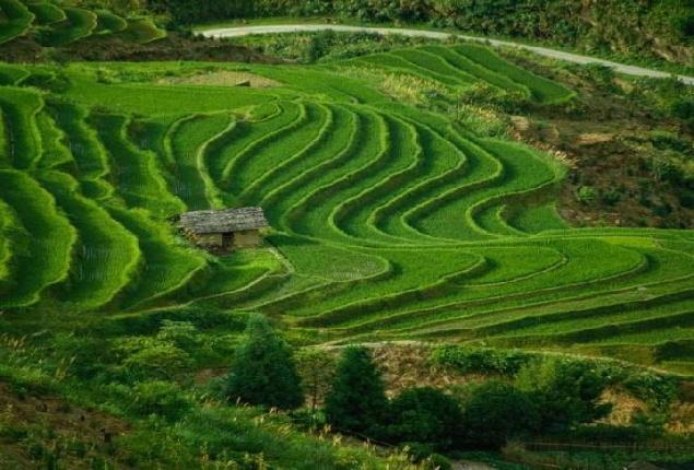 Pengertian Pertanian Tips Petani