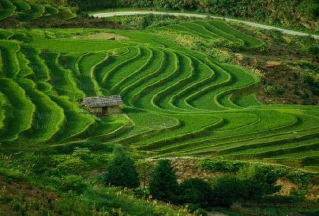 Pengertian Pertanian Dalam Arti Luas Dan Sempit