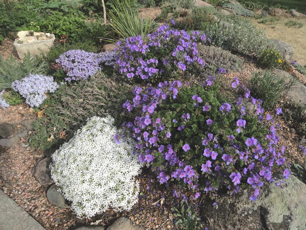 Easy rock garden ideas photograph it with some hybrid for Easy rock garden designs