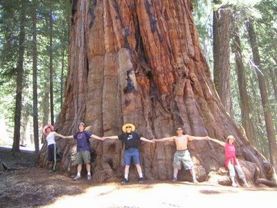 Você sabe qual a árvore mais alta do mundo