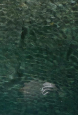 Makhluk Laut Misterius Terpotret di Lepas Pantai Yunani