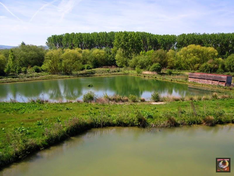 Humedal de Salburua en Vitoria-Gasteiz (Araba)