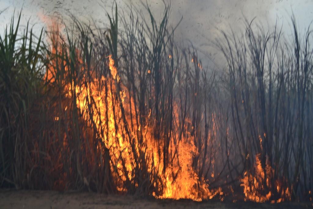 Quema de caña de azucar para la cosecha genera gran contaminación