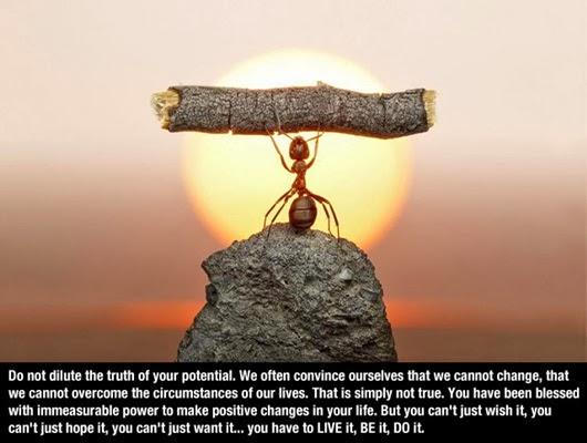 Motivasi seekor semut - Apa kata anda?, semut, serangga, kata-kata semangat, motivation