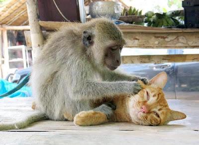 Foto de Monito y gatito