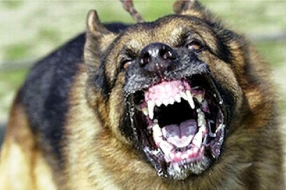 Rules of the Jungle: Avoiding dangerous dogs