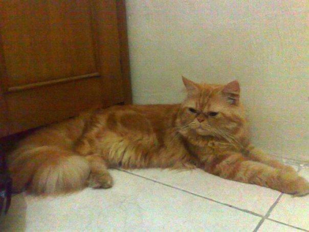 Kumpulan Gambar Hewan Kucing