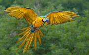 Parrot Wallpaper. Beautiful Parrot Bird 2012. Parrot Wallpaper