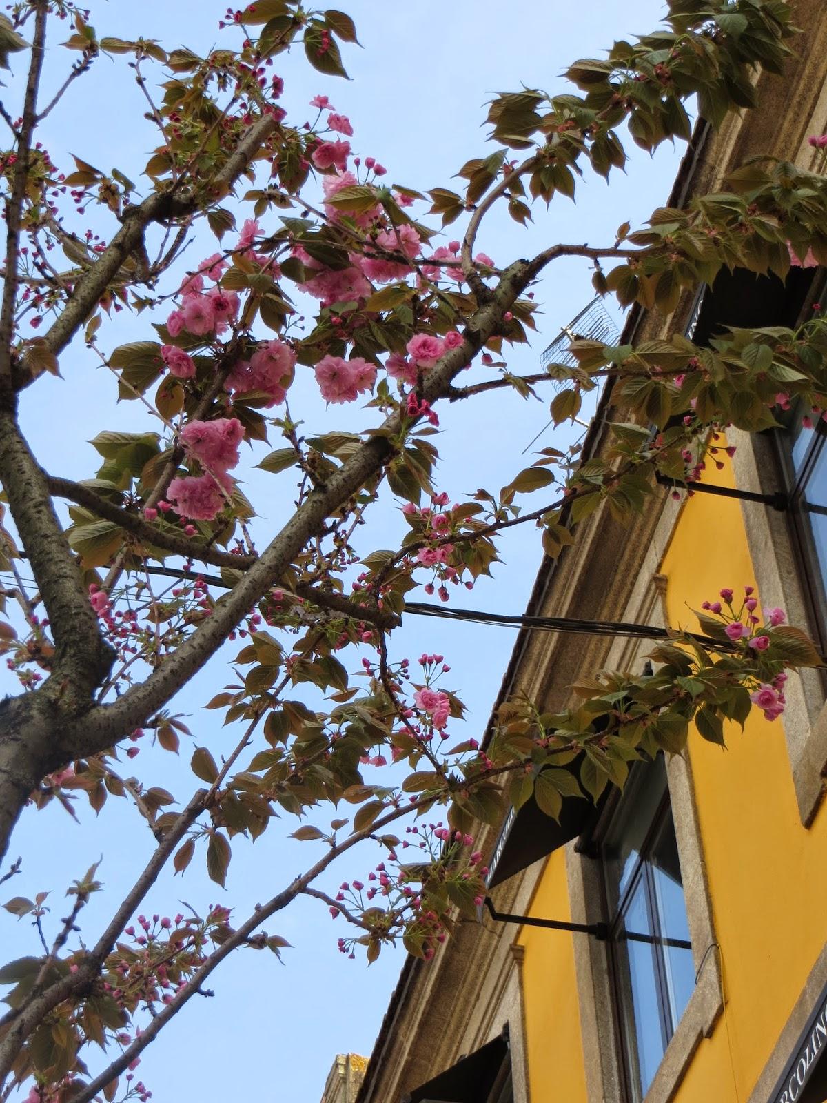 blooms spring porto portugal
