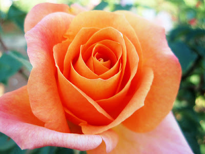 happy rose day quotes. Happy Mother#39;s Day: honoring
