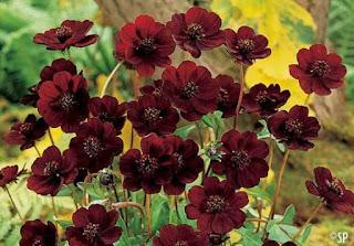 أندر 10 زهور في العالم، قد لن تراها البشرية مرة أخرى