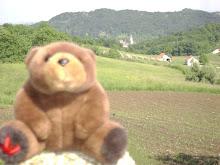 Teddy Bear in Zagorje,Croatian countryside