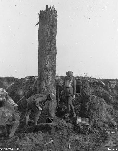 WW1 Camouflage Tree