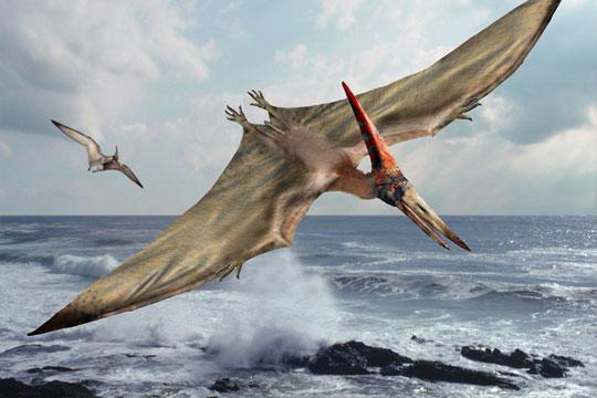 Dinosaur Art: Pteranod...