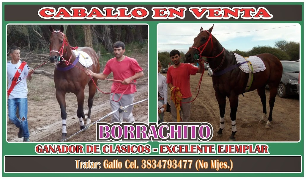 EN VENTA BORRACHITO