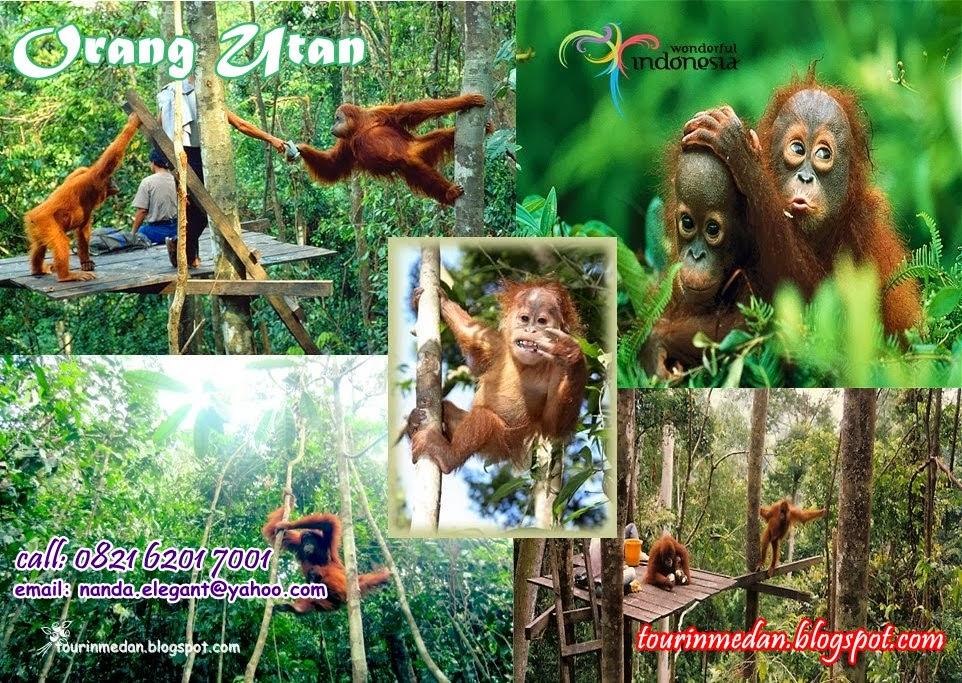 sumatera travel agent, Uronag Utan Tour, Bukit lawang Tour, Sumatera Bukit lawang, Overland Tour, Paket Tour Medan Overland, Tour Lake Toba And Orang Utan