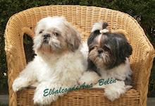 Las mascotas del Blog.