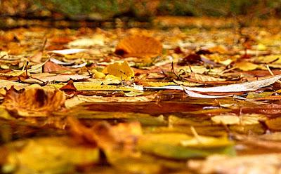 есен есенни листа поток паднали