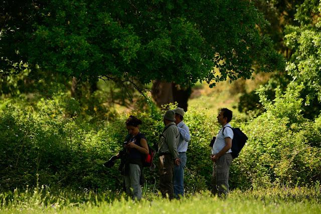 SEO/BirdLife, Grupo Local SEO-Sevilla. Excursión a Castaño del Robledo y Nacimiento del Odiel, 2 de mayo de 2015