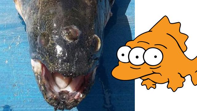 Ikan mata tiga ditemui di Argentina