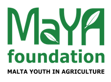 MaYA Foundation - Blog