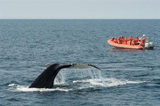 Whale-watching-Bay-of-Fundy
