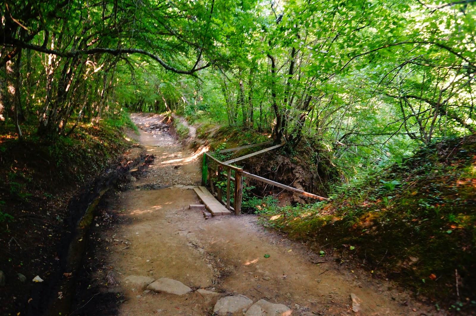 Лес-возле-Геленджика